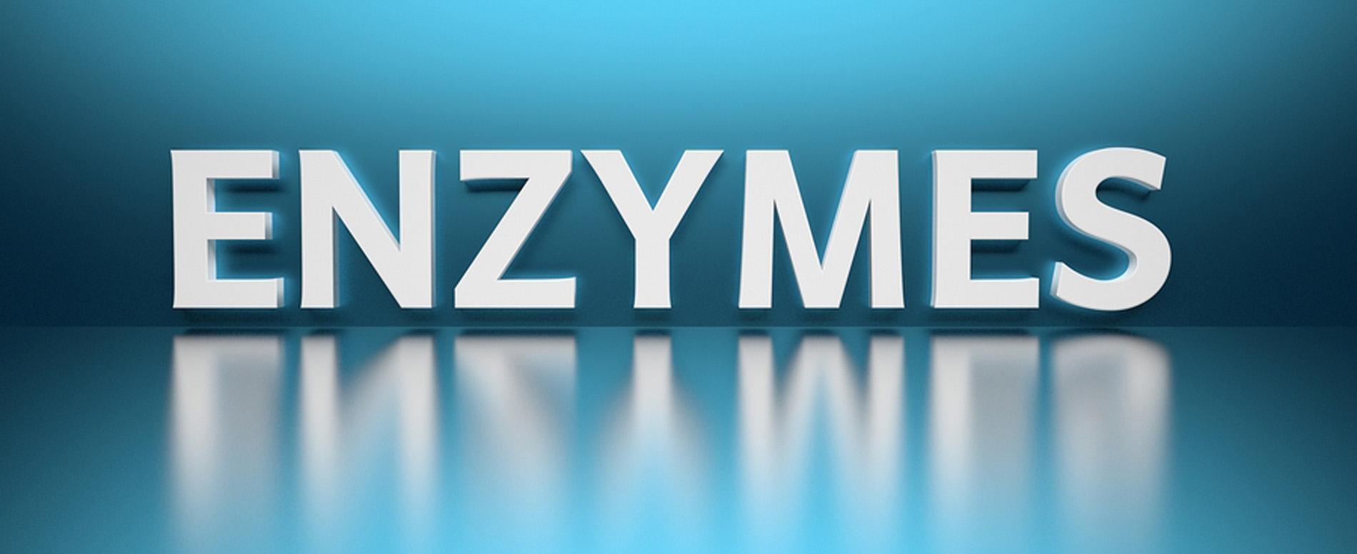 ebrator biochemicals banner enzymes